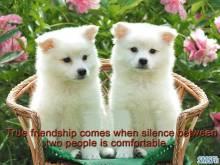Friendship 033