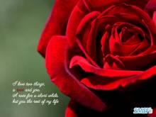 Love 008