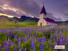 Church in Lavender Field