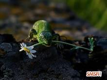 Green Lizard