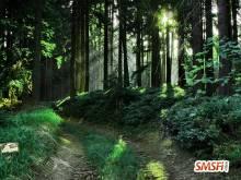 Lavish Green Forest