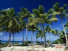 Coconut Palms Taunga Island