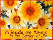 Friendship 009