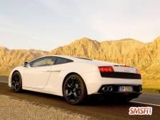 Lamborghini White Back
