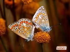 Butterfly True Love